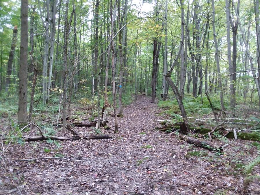 indian creek woods trail