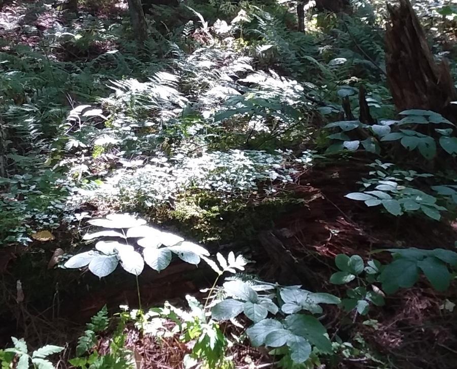 sept 13 woods