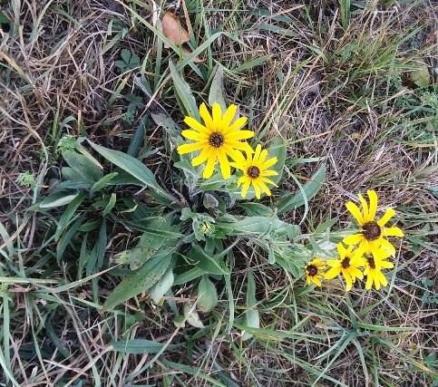 sept 16 field flower