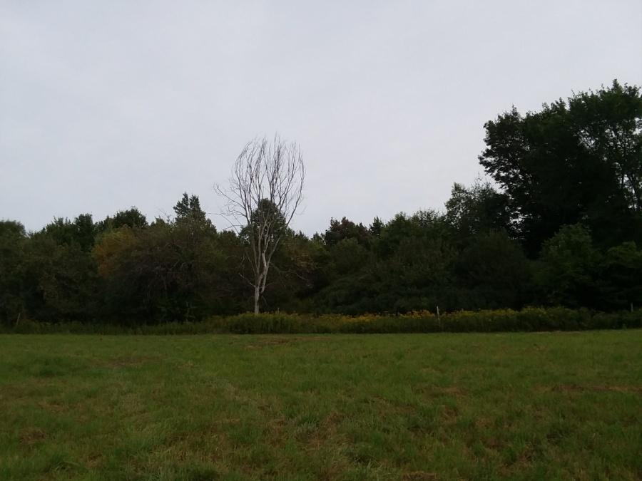 sept 9 woods walk dead elm