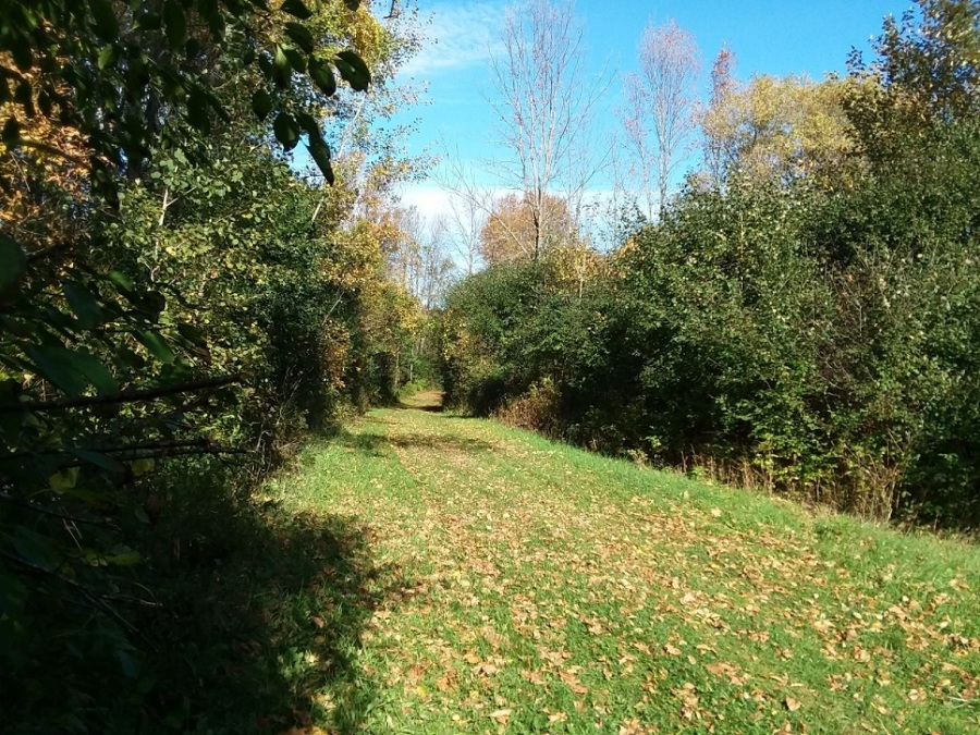 SUNY Canton trail mowed