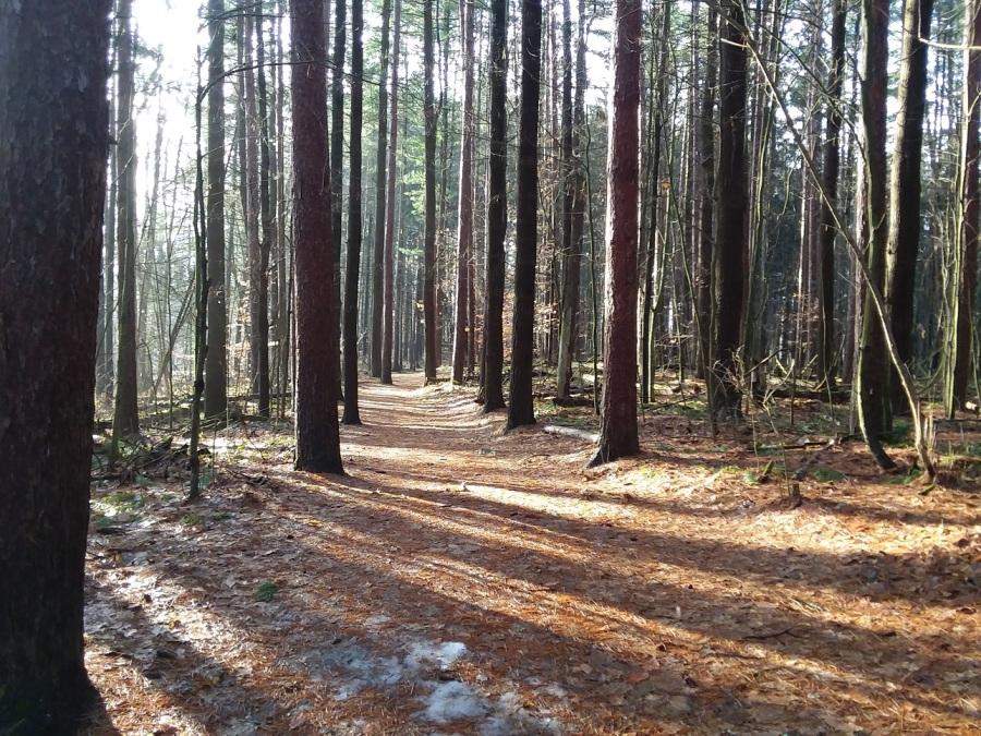 dec 15 sunny path