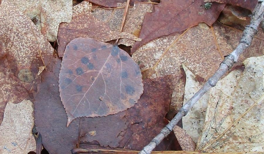 dec 16 fallen leaf