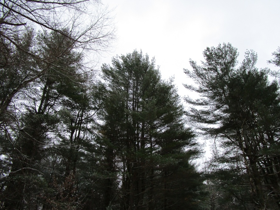 dec 17 plumb brook treetops