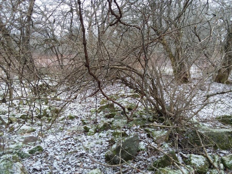 trails 2.jpg