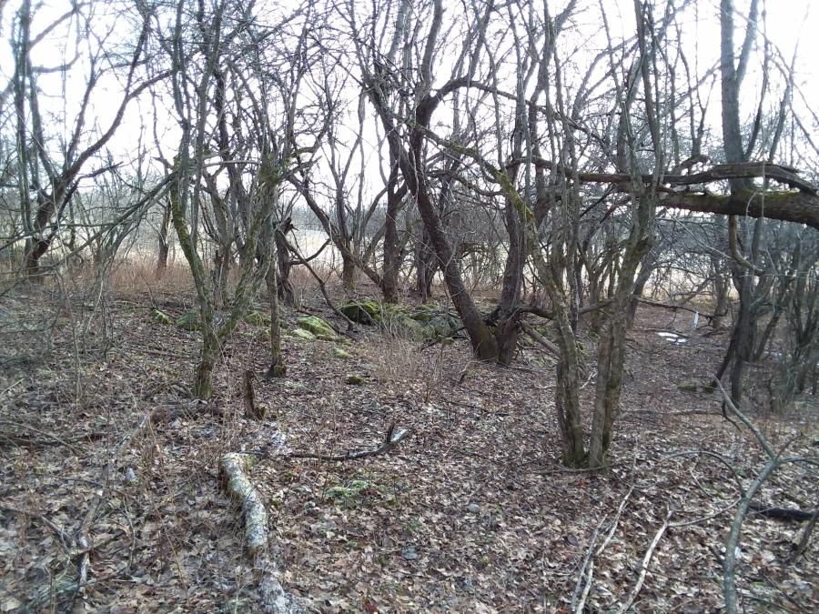 trails 4